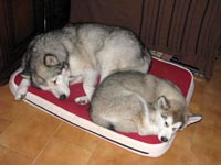 Kylie and Netooka sharing the bed