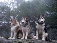 Roy, Netooka and Kylie, in the mist
