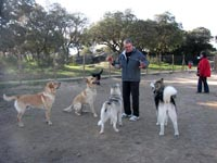 At the dog park, a good socialization